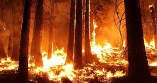 How forest fires are damaging the environment